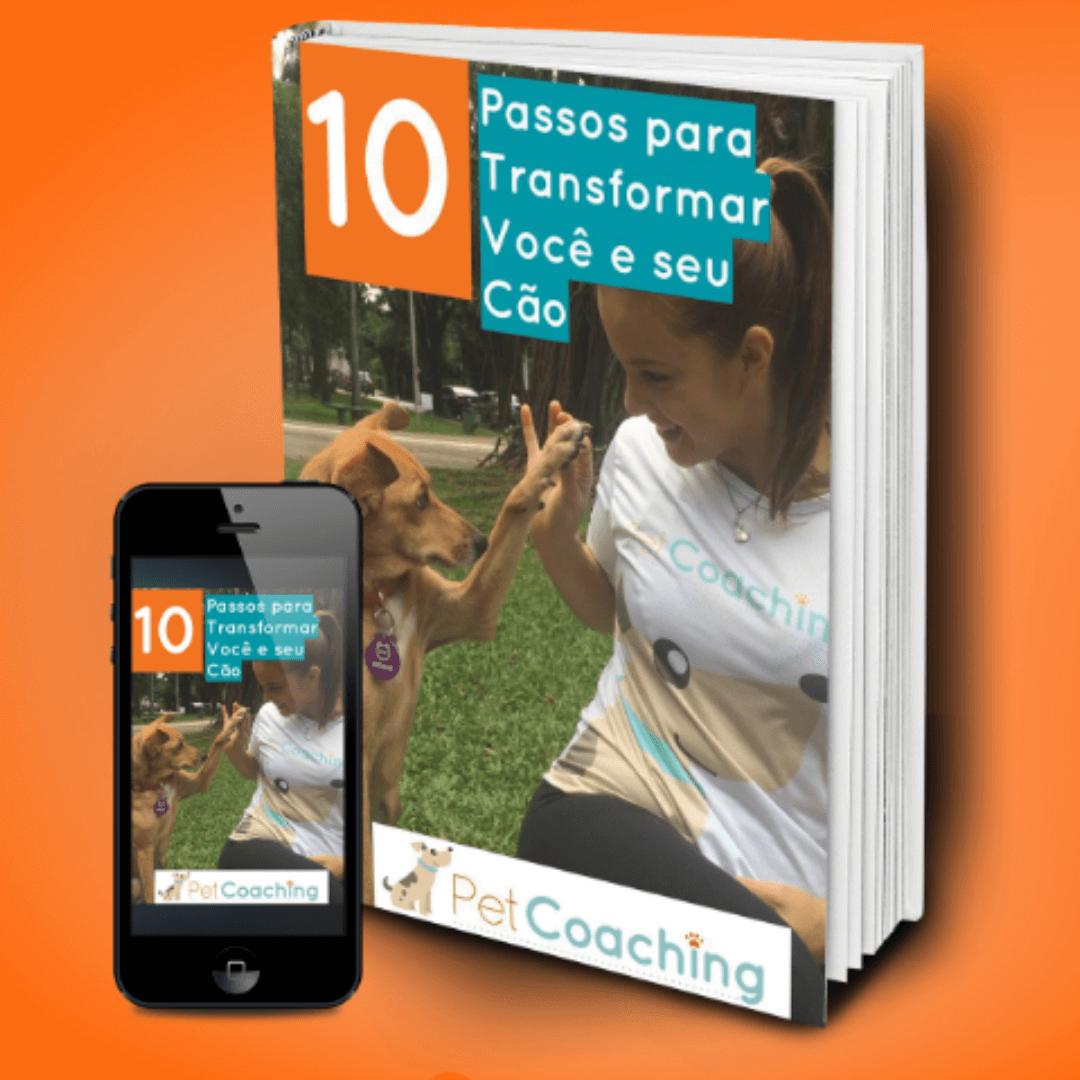10 Passos para TRANSFORMAR você e seu cão