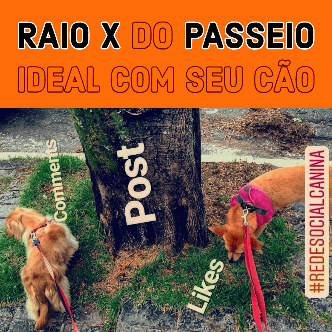 Raio X do Passeio Ideal