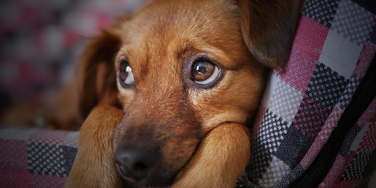 Lambeijos, Carla Ruas - Os Cães Entendem o que Falamos?