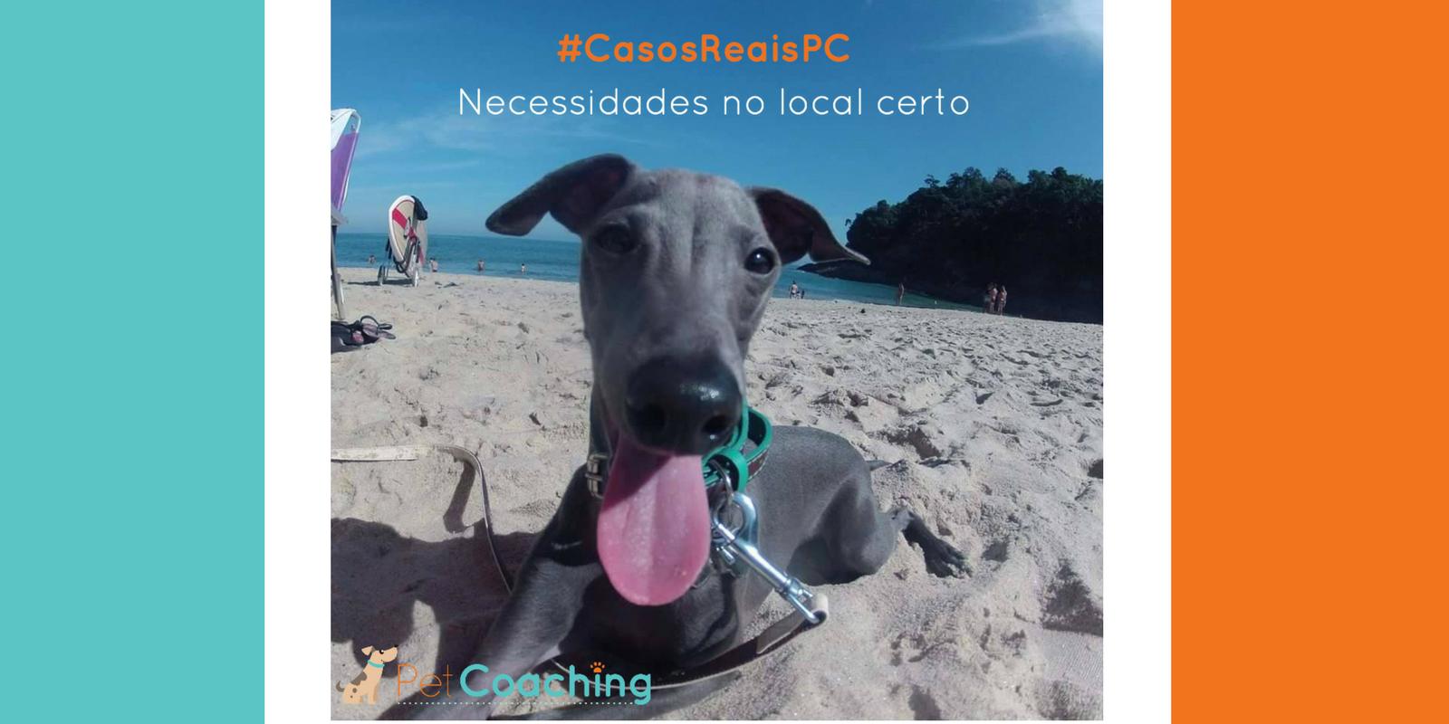 Lambeijos, Carla Ruas - #CasosReaisPC: Xixi e Cocô no lugar certo