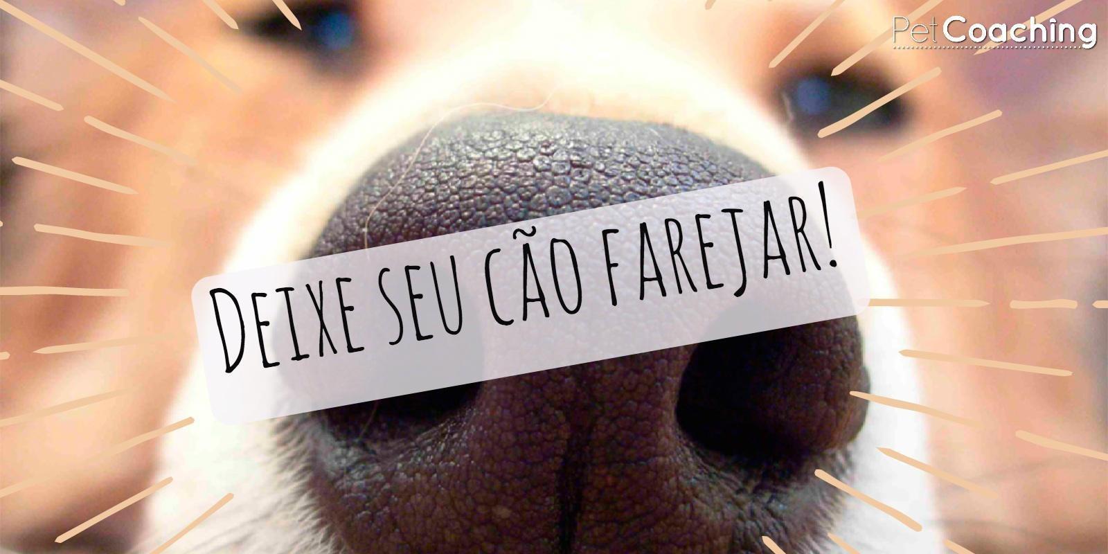Lambeijos, Carla Ruas - Deixe seu cão farejar!