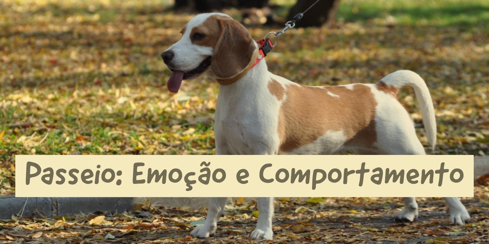Lambeijos, Carla Ruas - Passeio: Emoção & Comportamento
