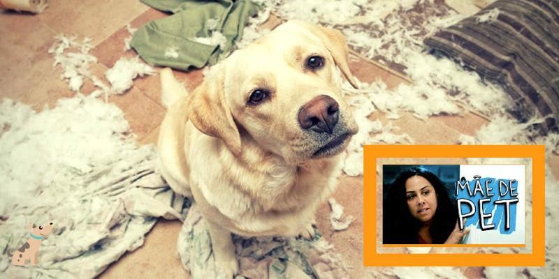 Você é Refém do seu Cão? [Vídeo Porta dos Fundos]