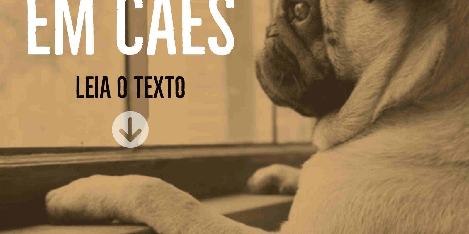 Lambeijos, Carla Ruas - A solidão em cães