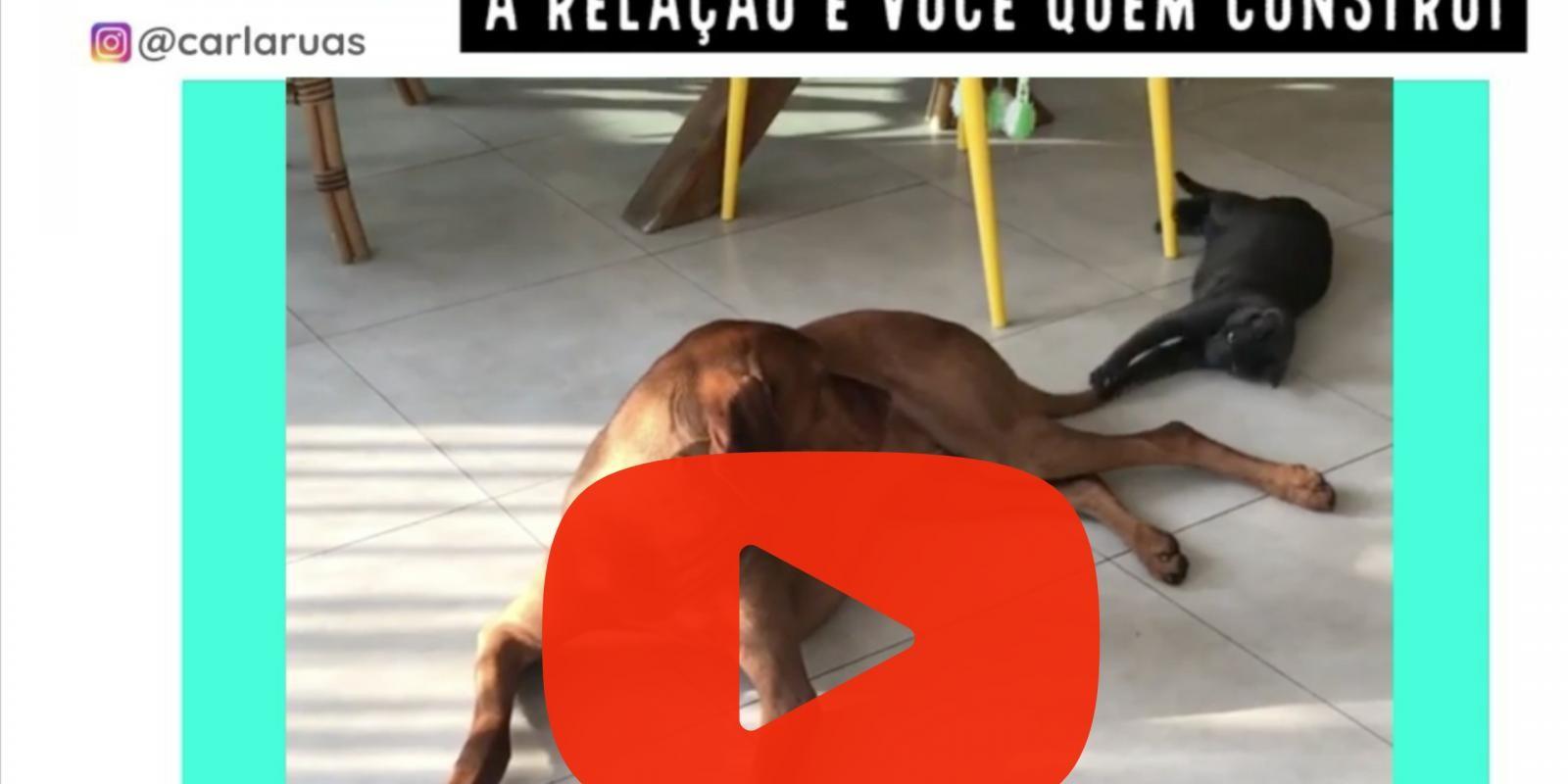 Lambeijos, Carla Ruas - Como cães e gatos podem ser amigos?