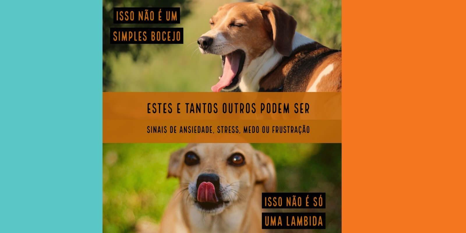 Lambeijos, Carla Ruas - Reatividade e Agressividade: o que você sabe sobre seu cão e seus desafios?