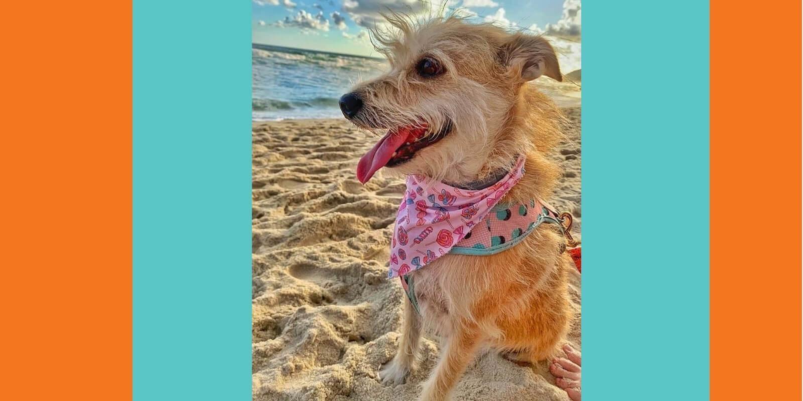 Lambeijos, Carla Ruas - Eu não treino cães…