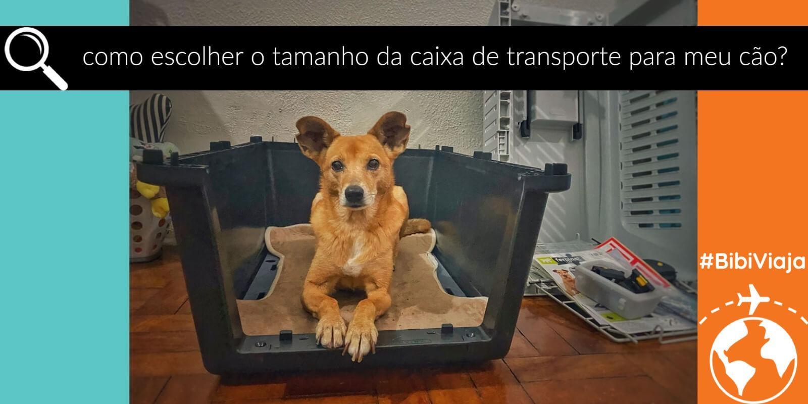 Lambeijos, Carla Ruas - Como escolher o tamanho da caixa de transporte para o meu cão?