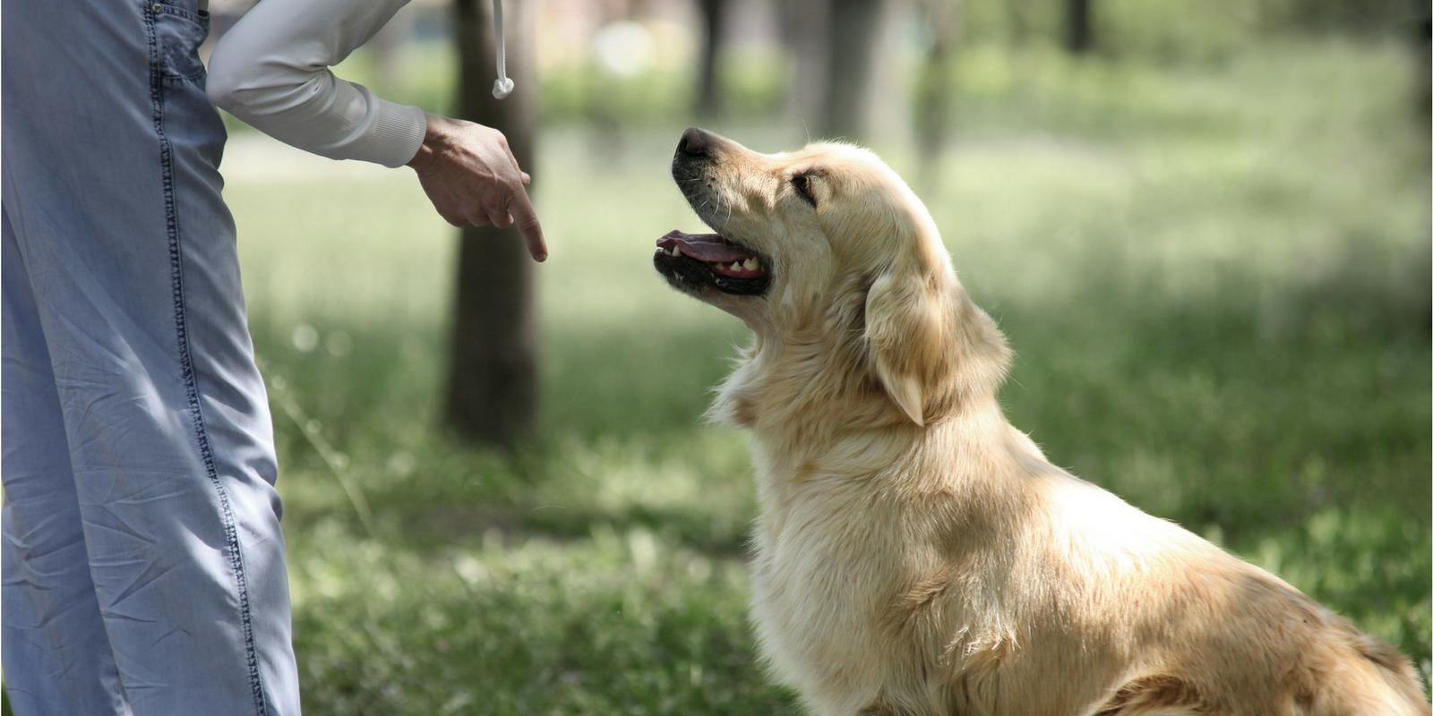O papel do Adestramento Moderno, ou melhor, da Educação Canina