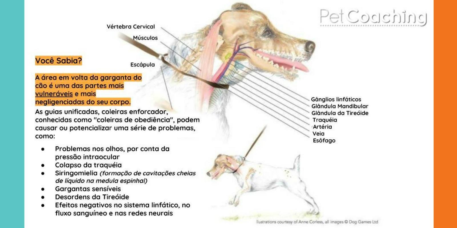 1654adbf6 Post de Esclarecimento sobre o não uso do Enforcador - PetCoaching