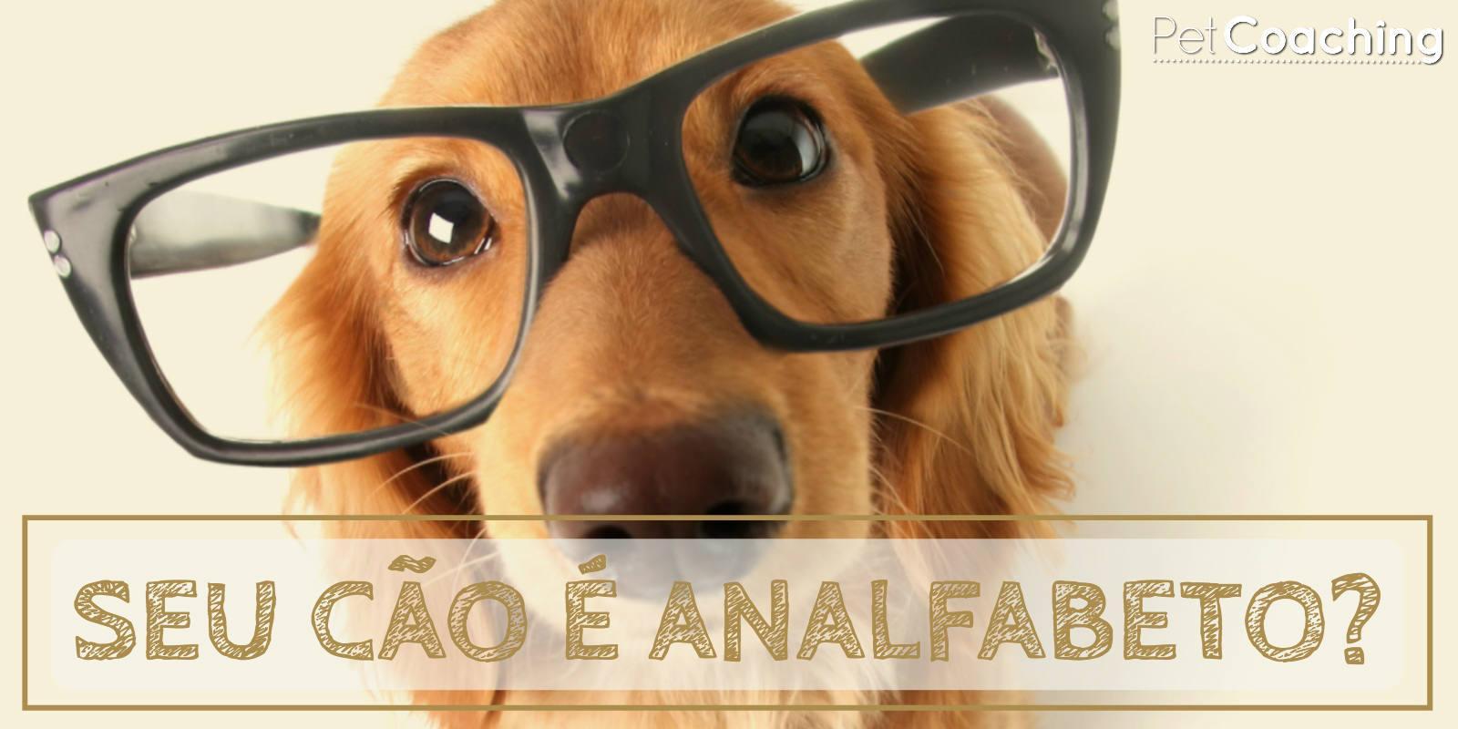 Seu cão é Analfabeto?