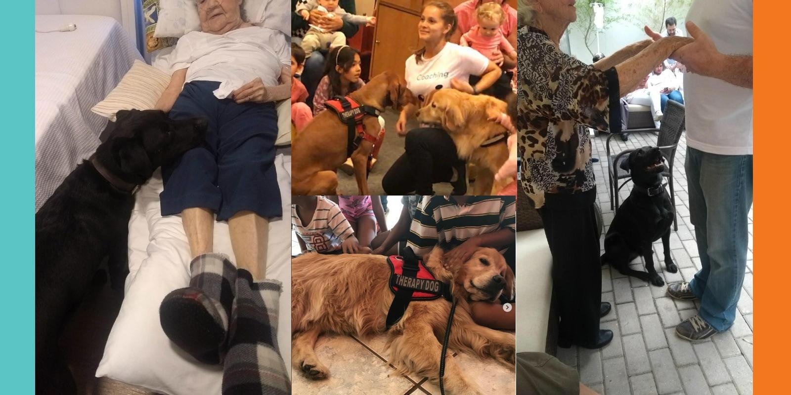 Terapia Assistida por Animais (TAA) e Educação Assistida por Animais (EAA)