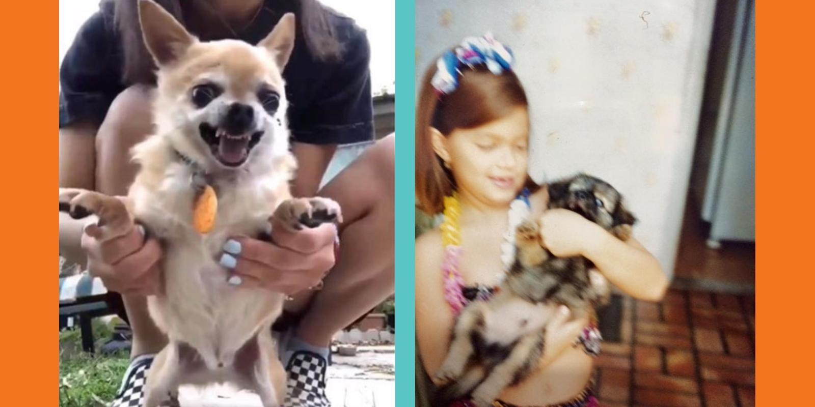 Por trás dos vídeos fofos dos cães nervosos da internet