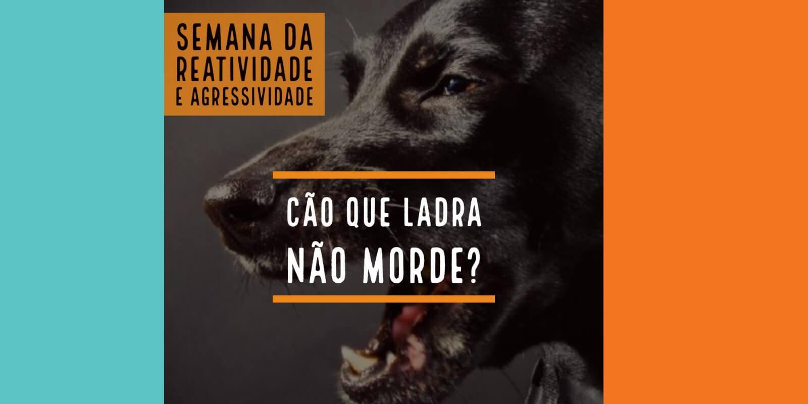 Cão que ladra não morde? Semana da Reatividade e Agressividade em Cães