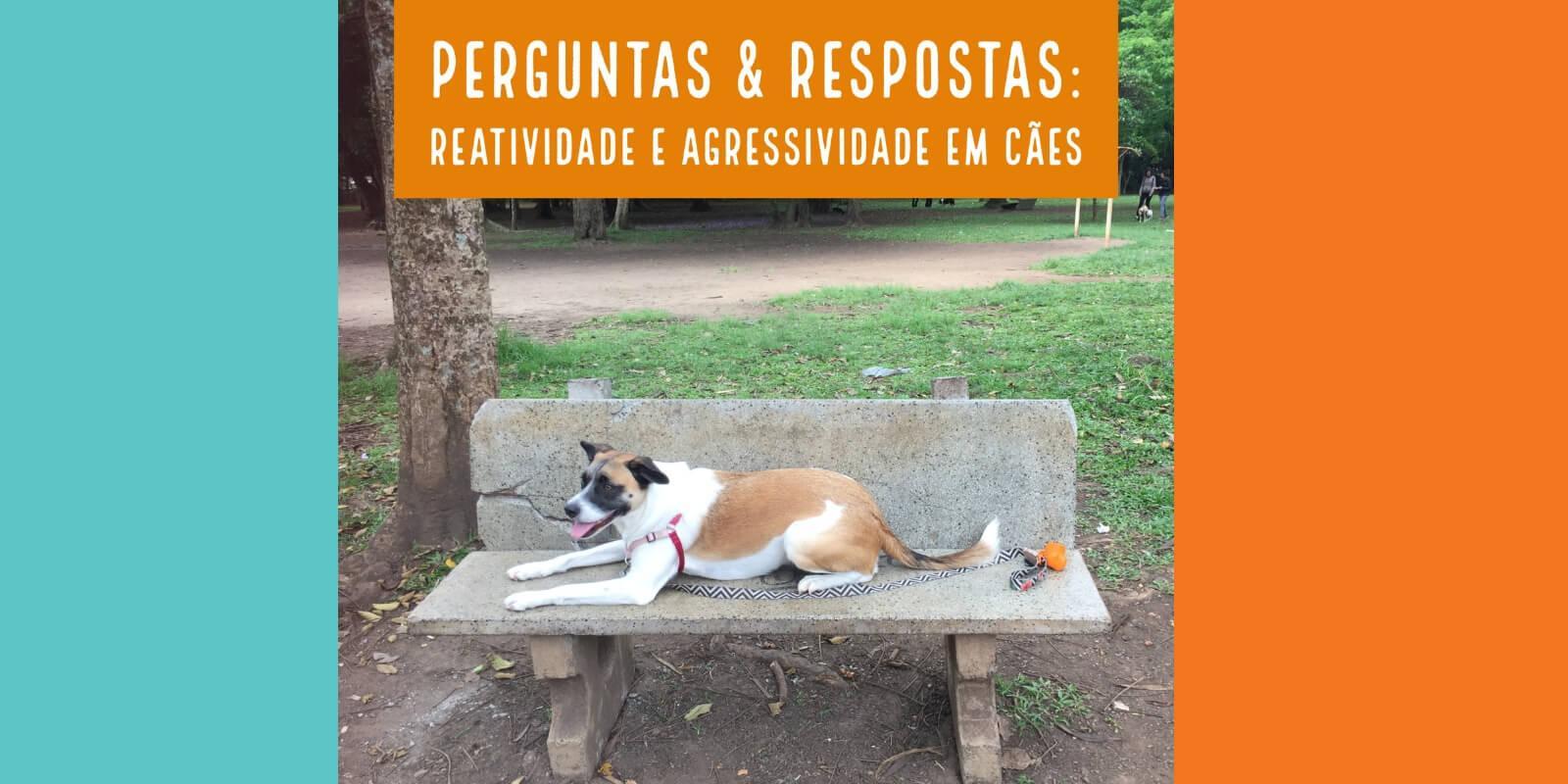 Casos Reais: Reatividade e Agressividade em Cães