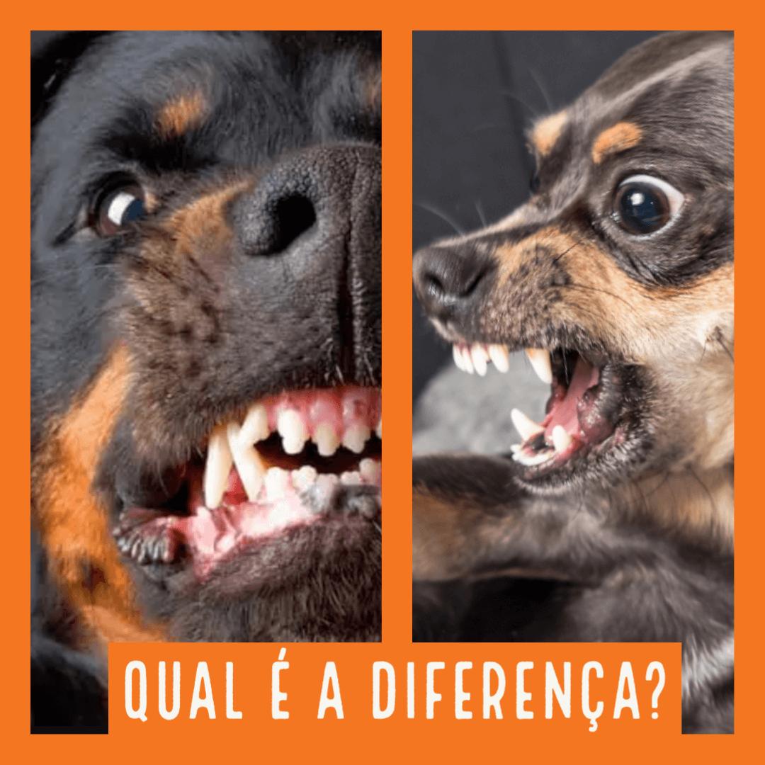 Qual é a diferença entre um cão bravo de grande porte para o de pequeno porte?
