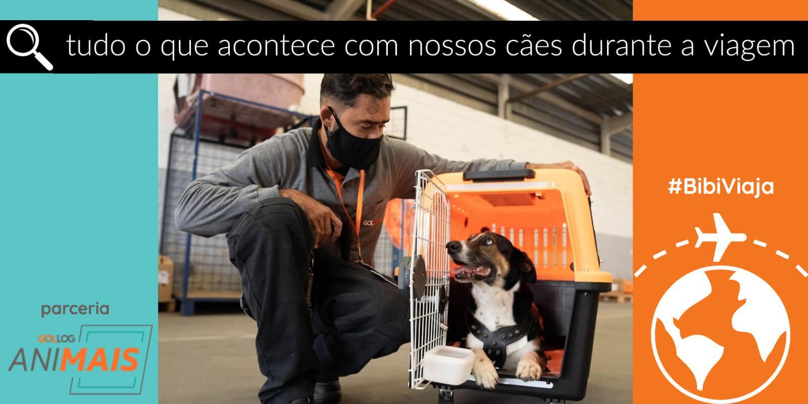 Perguntas e Respostas sobre tudo o que acontece com nossos cães durante a viagem de avião  #BibiViaja